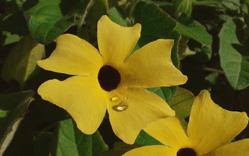 florojopoeta-laprincipal